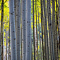 Inge Johnsson - Aspen Trunks