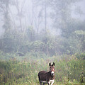 Gary Heller - August morning - Donkey...
