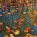 Peggy  Franz - Autumn  Floating