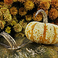 Betty Denise - Autumn Pumpkins and Mums