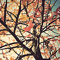 Rady - Autumn tree