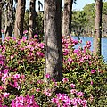 Cynthia Guinn - Azalea At The Lake