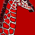Jane Schnetlage - Baby Giraffe In Red...