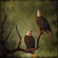 Wes and Dotty Weber - Bald Eagle Serenade D5343