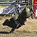 Ron Roberts - Bareback Bull riding