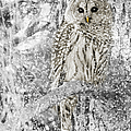 Jennie Marie Schell - Barred Owl Snowy Day in...