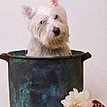 Edward Fielding - Bath Time Westie