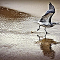 Walt Foegelle - Beach Bird Preparing For...