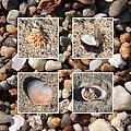 Beach Shells And Rocks Collage by Carol Groenen
