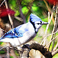 Trina  Ansel - Beautiful Blue Jay with...