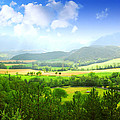 Beautiful Greens Landscape by Boon Mee