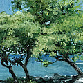 Stacy Vosberg - Big Island Trees