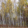 Patti Deters - Aspen Trees at Lake...