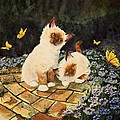 Sherry Shipley - Birmans and Butterflies