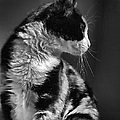 Jennie Marie Schell - Black and White Cat in...
