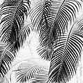 Karon Melillo DeVega - Black and White Palm...