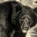 Myrna Bradshaw - Black Bear Beauty