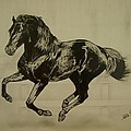 Melita Safran - Black stallion