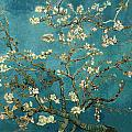 Tilen Hrovatic - Blossoming Almond Tree -...