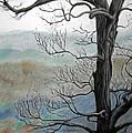 Jane Steelman - Blue Ridge Mountain Tree