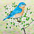 Bluebird and Dogwood