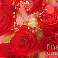 Bokeh Roses by Cheryl Young