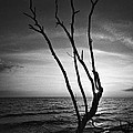 Bradley R Youngberg - Bonita Beach Tree Black...