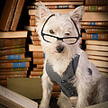 Edward Fielding - Bookworm Dog