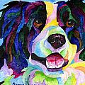 Sherry Shipley - Border Collie