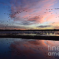 Bob Christopher - Bosque Del Apache Sunrise