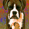 Boxer 20130126v1 by Wingsdomain Art and Photography