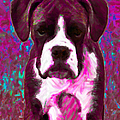 Boxer 20130126v7 by Wingsdomain Art and Photography