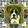 Boxer Dog 20130126 by Wingsdomain Art and Photography