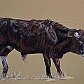 Ann Marie Chaffin - Brindle Steer