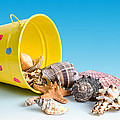 Tom Mc Nemar - Bucket of Seashells...
