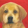 Jeanne Fischer - Buddy the Labrador