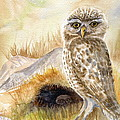 Marilyn Smith - Burrowing Owls