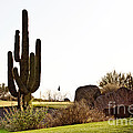 Scott Pellegrin - Cactus Golf