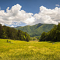 Dave Allen - Cades Cove Great Smoky...