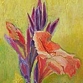 Canna Lily by Janet Ashworth