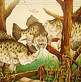 Bruce Bley - Captivating Crappies