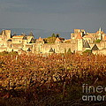 France  Art - Carcassonne in Fall