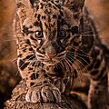 Ashley Vincent - Cautious Advance