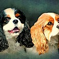 Cavalier King Charles by Diana Angstadt