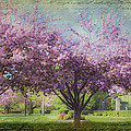 Karen Stephenson - Cheery Cherry Trees -...