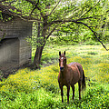 Debra and Dave Vanderlaan - Chestnut Horse in a...