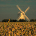 David Attenborough - Chillenden Windmill