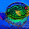 Merton Allen - Colorfull Fish -...