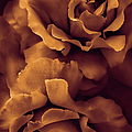 Jennie Marie Schell - Copper Roses
