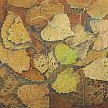 Linda Harrison-parsons - Cottonwood Leaves